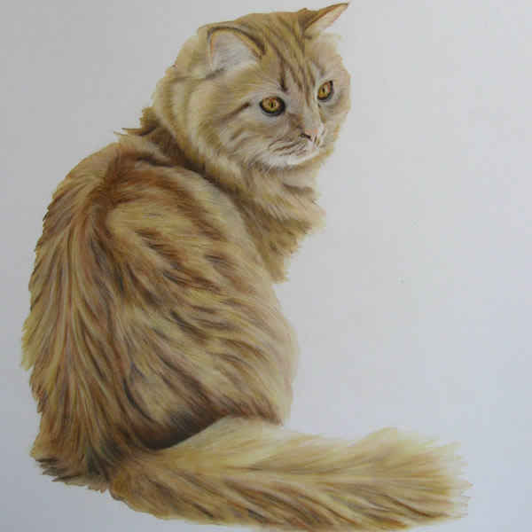 Portrait of Ginger Tabby Cat Toffee