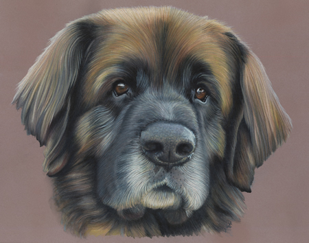 Leonberger Dog Portrait