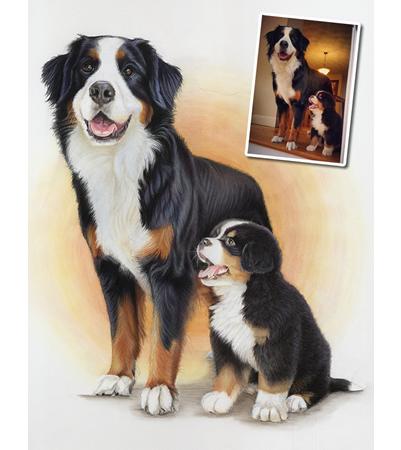 Bernese Mountain Dog Portrait