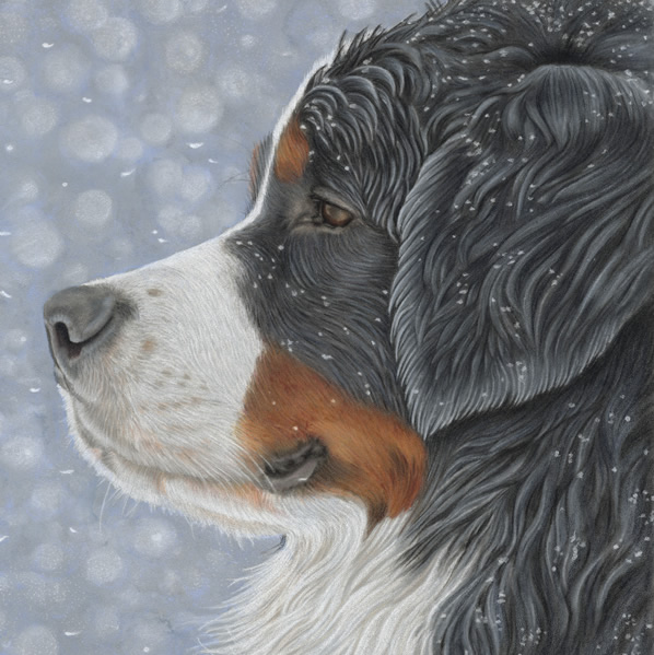 Drawing of Bernese Mountain Dog in the Snow