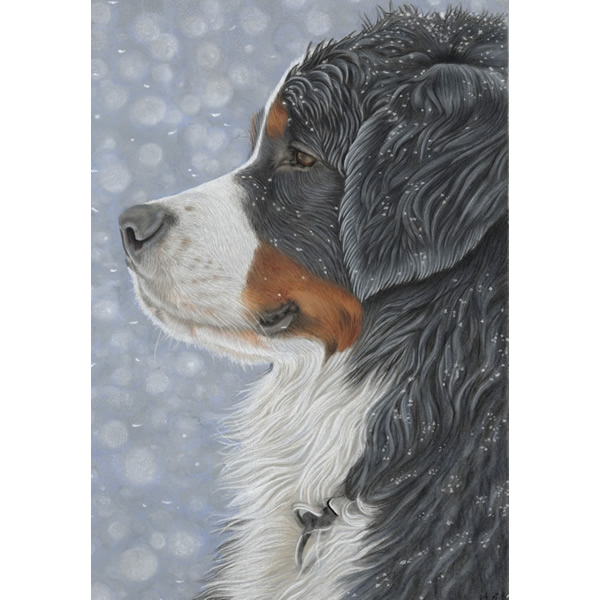 Bernese Mountain Dog Portrait - Ira