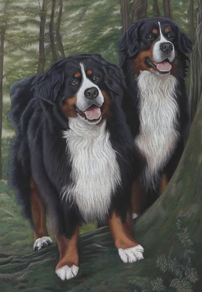 Bernese Mountain Dog Portrait - Vino and Rioja
