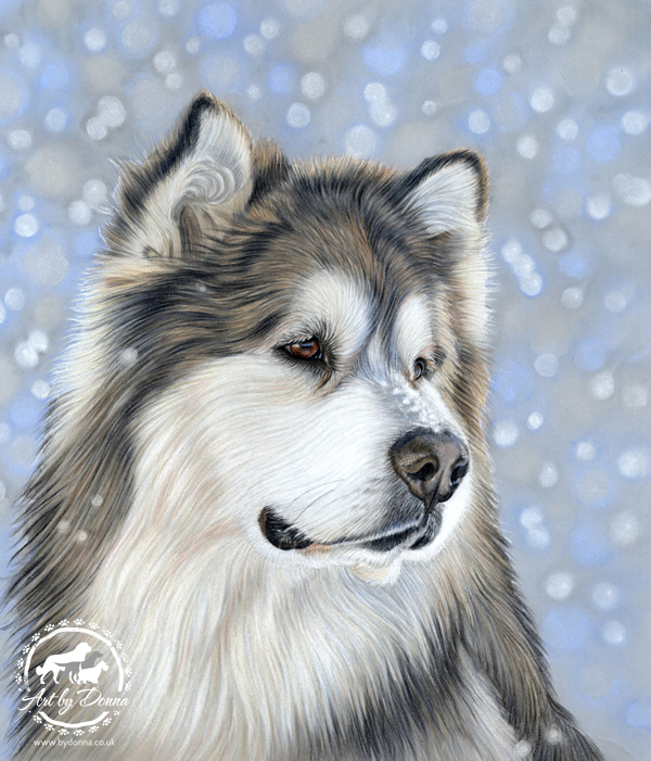Alaskan Malamute Dog Portrait