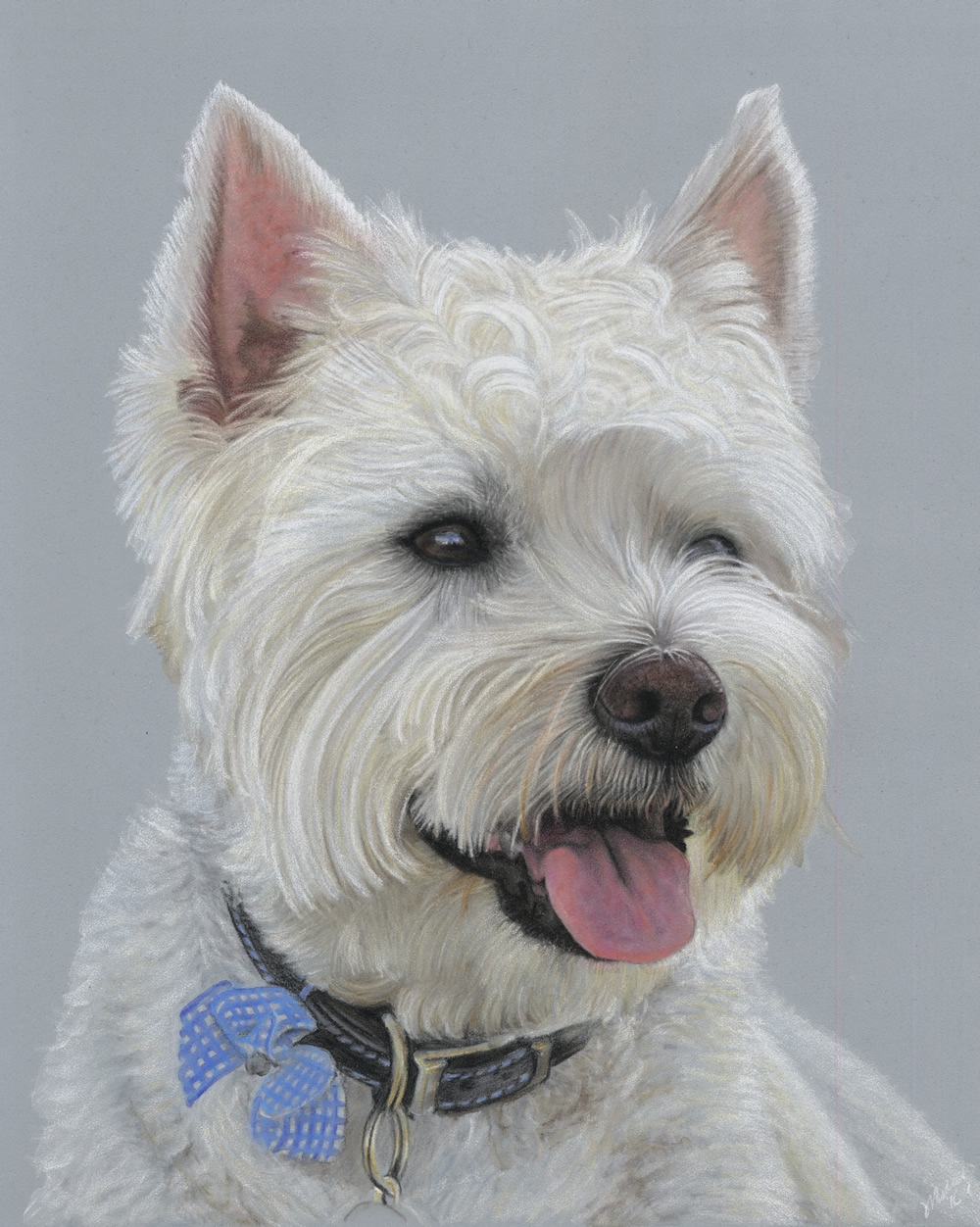 West Highland Terrier - Alfie