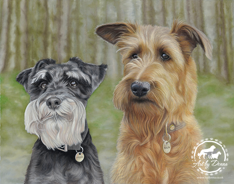Miniature Schnauzer Portrait, Irish Terrier Portrait