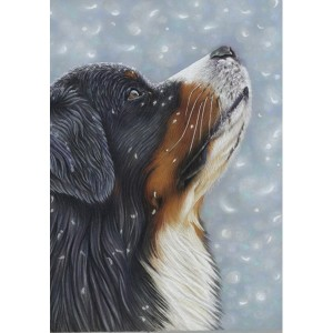 Bernese-Blue-Snow-Card