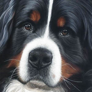 Bernese-Jesse-Card