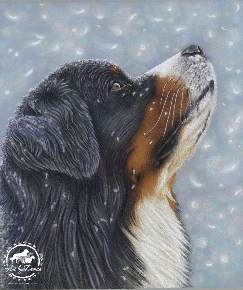 Bernese Mountain Dog Catching Snowflakes by Pet Portrait Artist