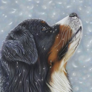 Bernese-Snow-Blue-SQ