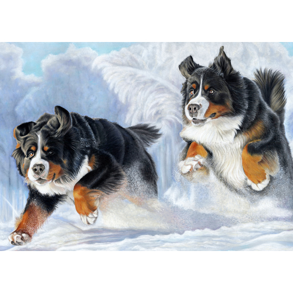 Bernese-in-Snow-Christmas-Card