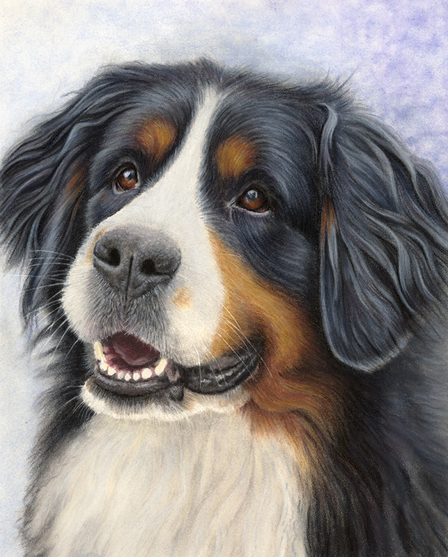 Bernese Mountain Dog Portrait - Lily
