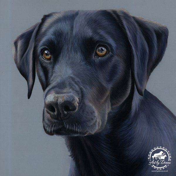 Black-Labrador-Portrait-River