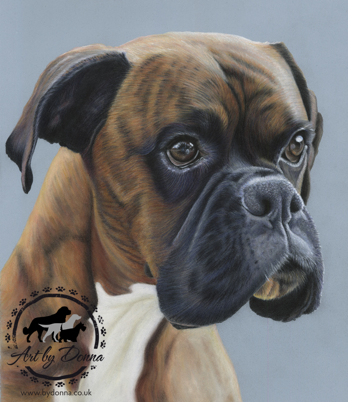Pet Portrait of Boxer Dog Jack