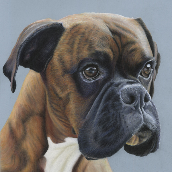 Brindle-Boxer-Greeting-Card