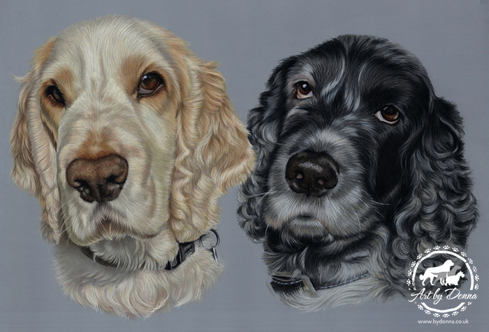 Cocker-Spaniels-Portait