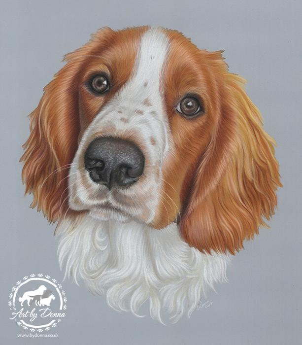 Welsh Springer Spaniel Portrait