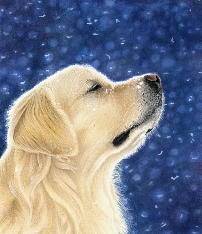 Dog_Portrait_Golden_Retriever_Monti-2