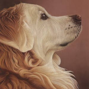 Golden-Retriever-Card-Oscar