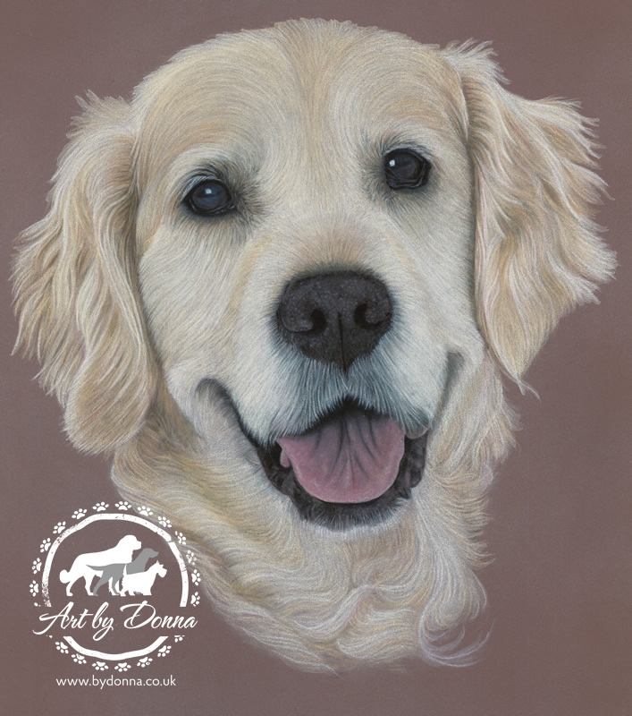 Golden Retriever Portrait - Eve