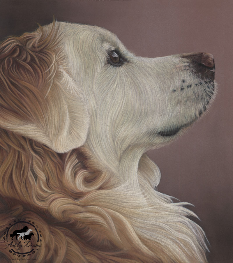 Golden Retriever Dog Pet Portrait Painting