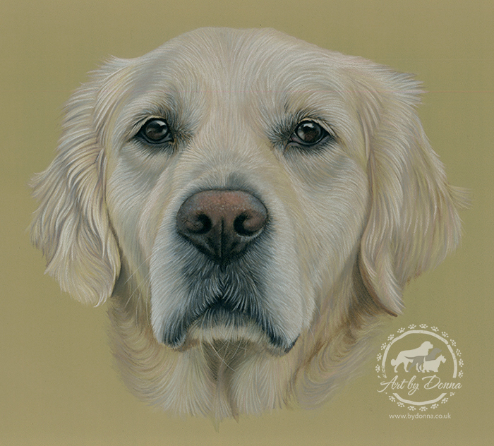Golden_Retriever_Portrait_Brooke