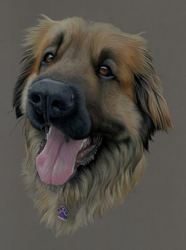 Leonberger Portrait - Indi