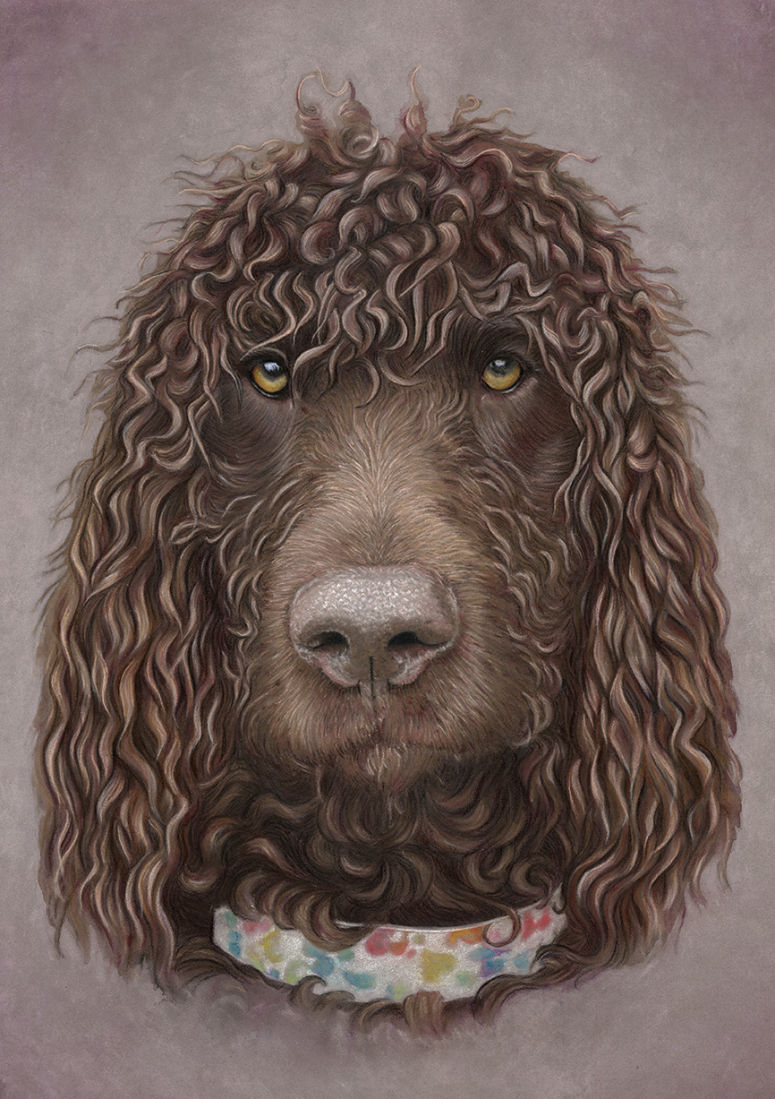Irish Water Spaniel Portrait - Boris