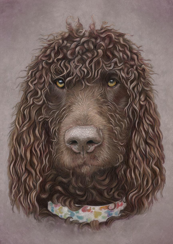 Irish Water Spaniel Portrait - Boris