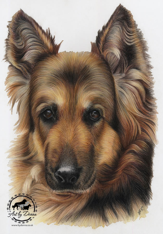 German Shepherd Portrait - Koda