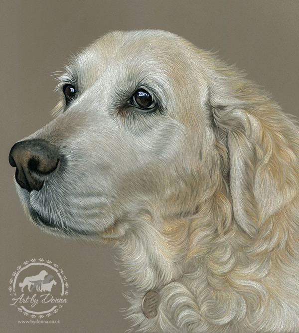 Lucy-Golden-Retriever-Portrait