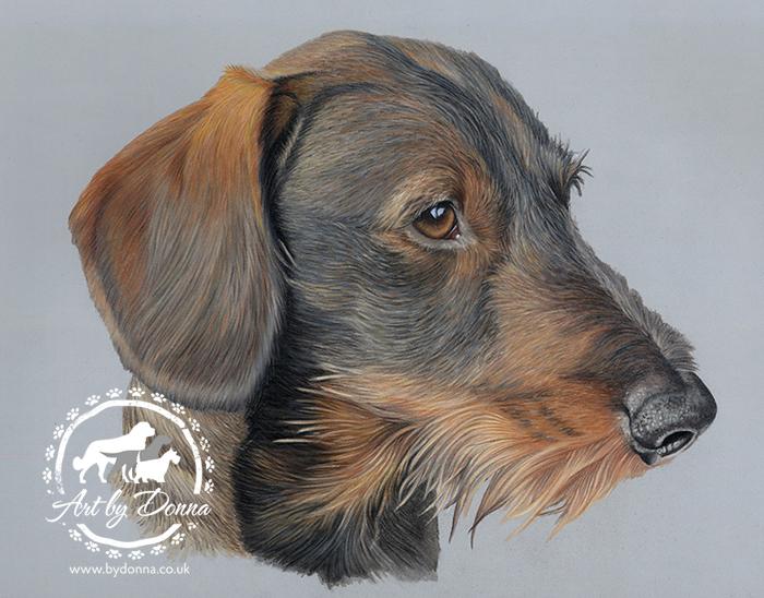 Portrait of Wirehaired Dachshund Dog