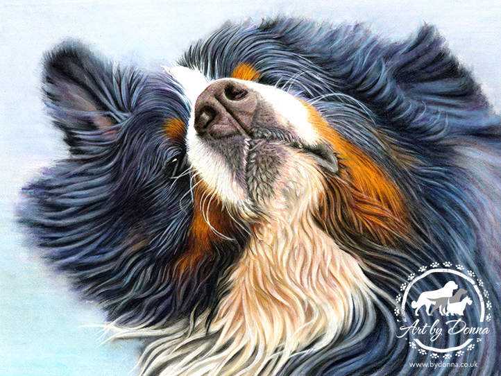 Pet Portraits - Bernese Dog - Baron