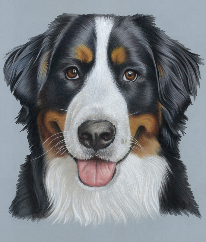 Bernese Mountain Dog Portraits - Bella