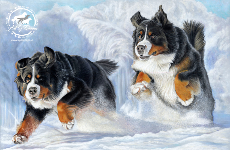 Bernese Mountain Dogs Dashing Through the Snow