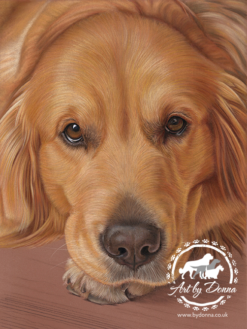 Portrait of Pet Dog - Golden Retriever, Honey
