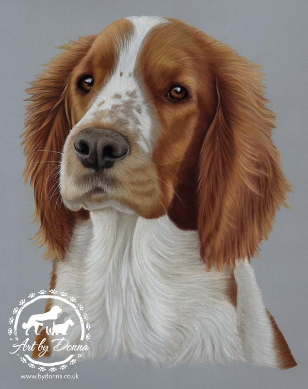 Portrait of Welsh Springer Spaniel Dog