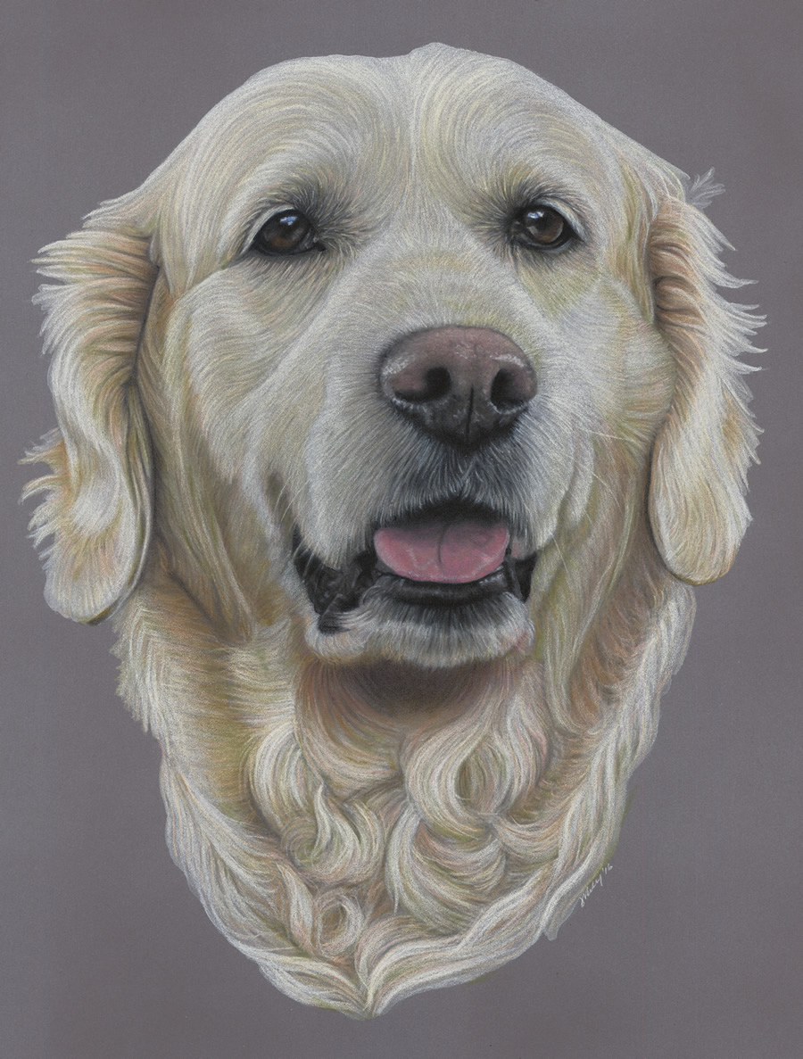 Golden Retriever Dog Portrait - Shiloh