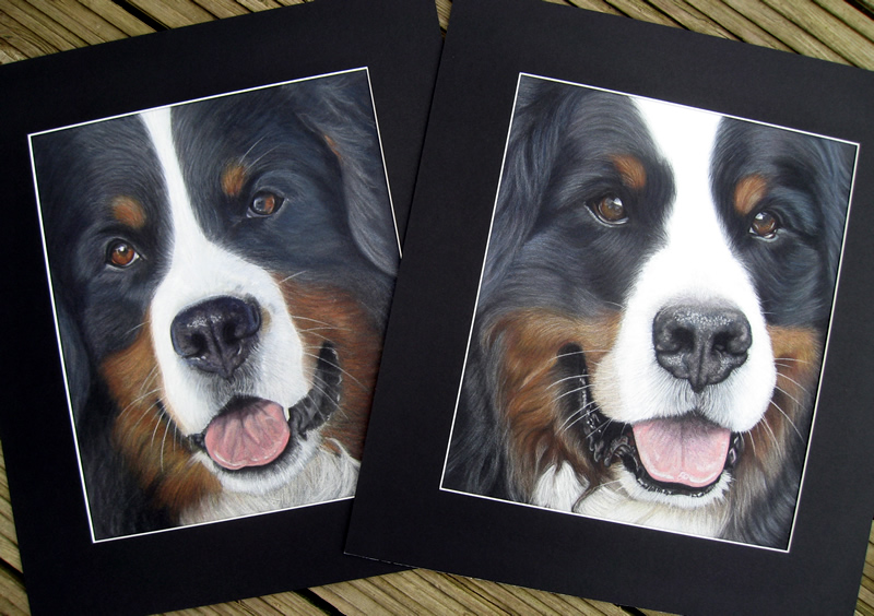 Paintings of Bernese Mountain Dogs