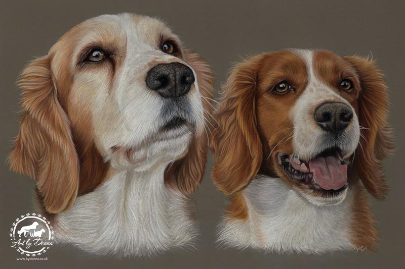 Welsh Springer Spaniels Stella-Scarlett-