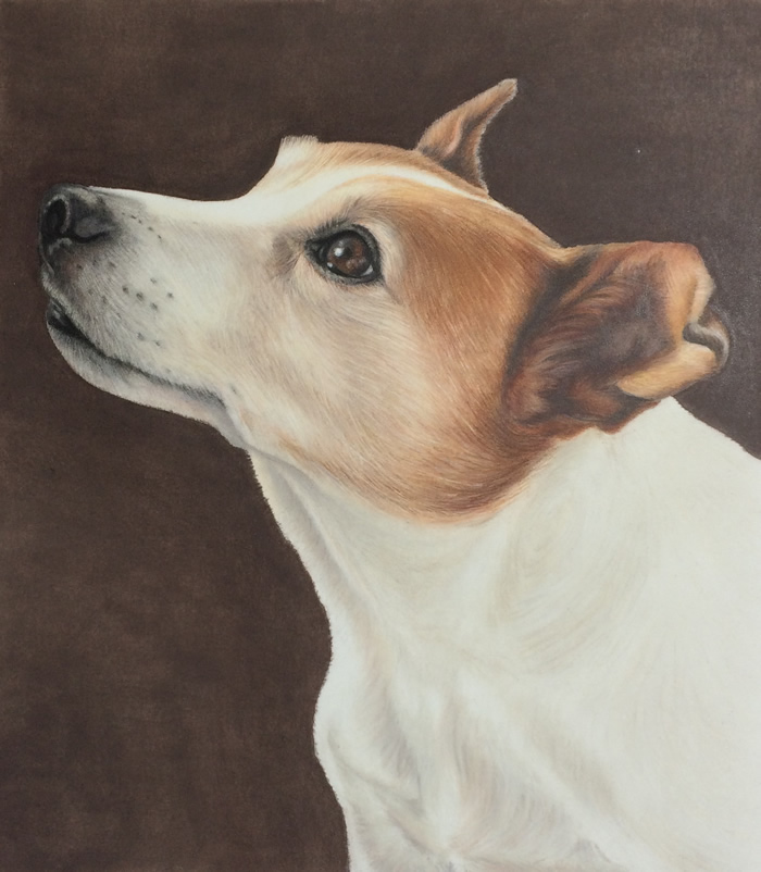 Jack Russell Terrier Harvey