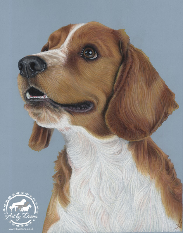 Welsh Springer Spaniel Dog Portrait